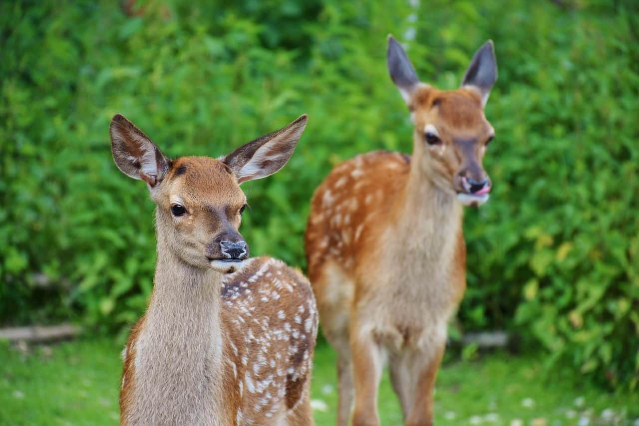National video-games day,                 spotted deer wildlife
