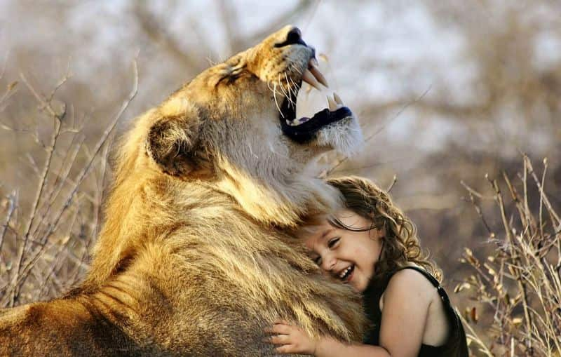 best-friends lion roar africa
