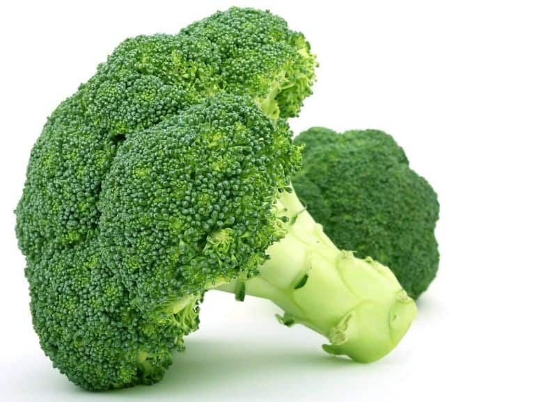 broccoli broccoli vegetable diet