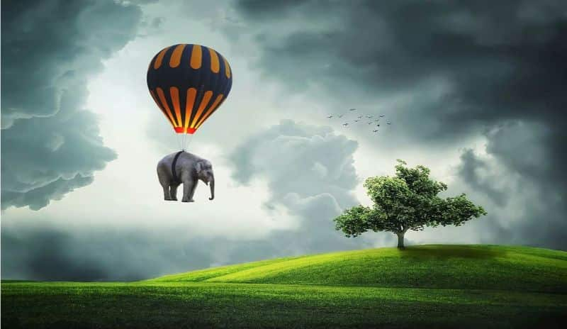 National free-balloon day,                 elephant balloon fly                balloons air festival                balloon free glass