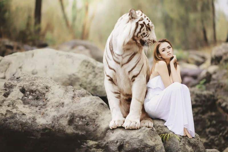National friendship day,                 nature animal world white bengal tiger