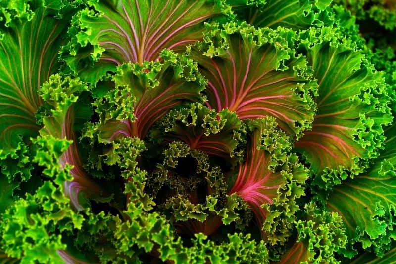 National kale day,                 fruit vegetables box