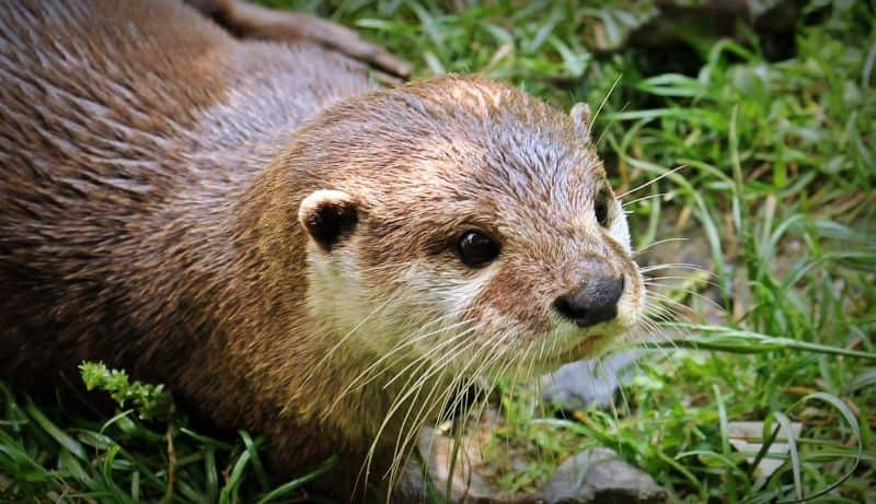 National otter day,                 otter cute animal