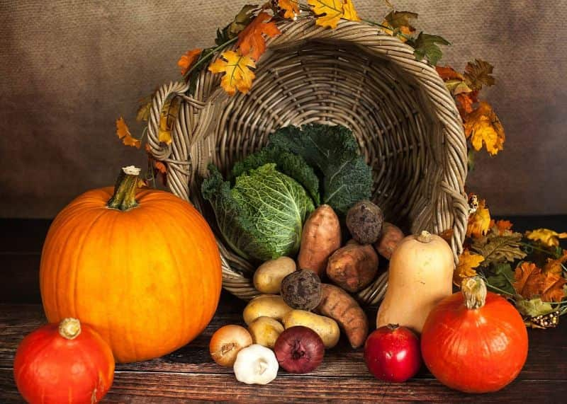 National potato day,                 pumpkin vegetables autumn                potato cook pot                potatoes vegetables erdfrucht