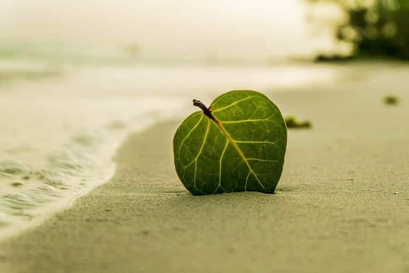 relaxation beach leaf green