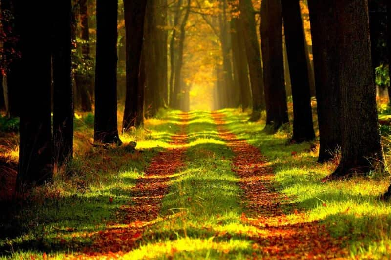 National straight day,                 forest path trees                woodland road falling leaf                railway rails track